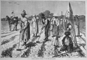 an illustration of black slaves working on plantation fields...
